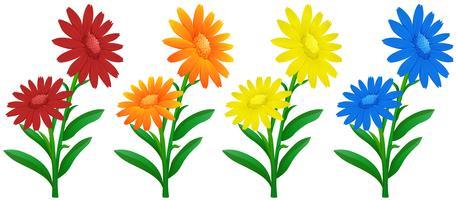 Flores de calêndula em quatro cores vetor