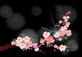 Flores de cerejeira no ramo vetor