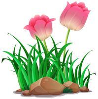 Flores de tulipa rosa no jardim vetor