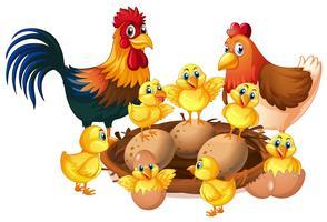 Família de frango no fundo branco vetor
