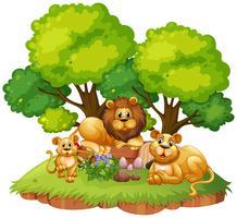 Família de Leões na natureza isolada vetor
