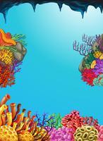 Cena, com, recife coral, submarinas