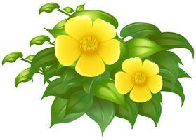 Flores amarelas no arbusto verde vetor