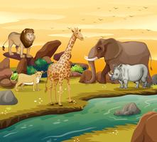 Animais selvagens na margem do rio