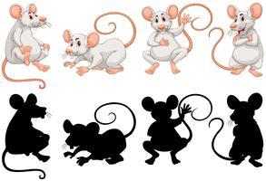 Ratos brancos em quatro ações vetor