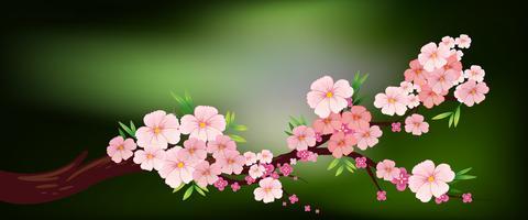 Flor de cerejeira no ramo vetor