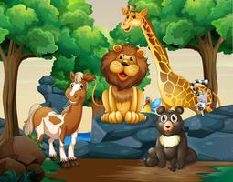 Diferentes tipos de animais selvagens na floresta vetor