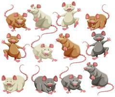 Rato vetor