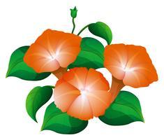 Morning glory na cor laranja vetor