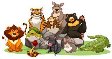 Diferentes tipos de animais selvagens na rocha vetor