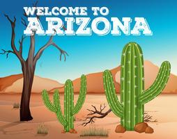 Cactos no estado do Arizona