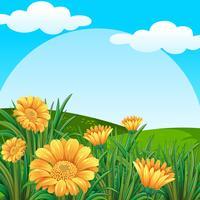 Cena de fundo com flores amarelas no campo vetor