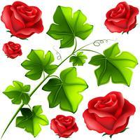 Folhas verdes e rosas vermelhas
