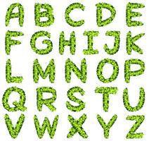 Alfabeto design em folhas verdes vetor