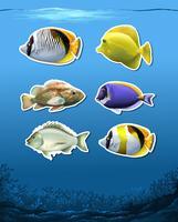 Conjunto de peixes subaquáticos