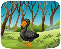 Um cisne negro no fundo da natureza vetor