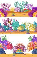 Três cenas subaquáticas com recife de coral