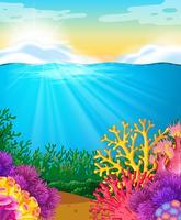 Recife coral, sob, a, mar