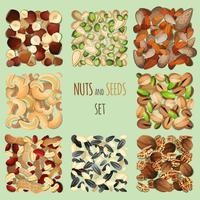 Conjunto de nozes e sementes vetor