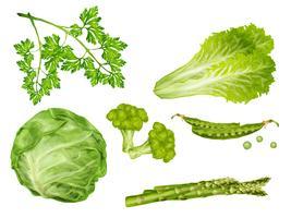 Conjunto de vegetais verdes