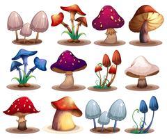 Conjunto de cogumelos vetor