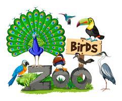 Diferentes tipos de aves no zoológico vetor