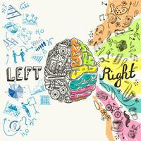 Esboço de hemisférios cerebrais vetor