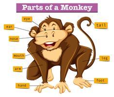 Diagrama mostrando partes do macaco vetor