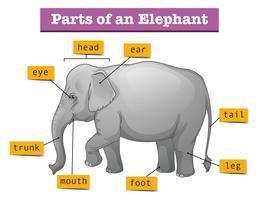 Diagrama mostrando partes do elefante vetor