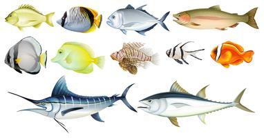 Peixes diferentes vetor
