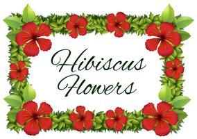 Flores de hibisco vermelho ao redor do quadro vetor
