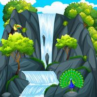 Pássaro tucano na cachoeira vetor