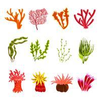 Conjunto de ícones de coral vetor