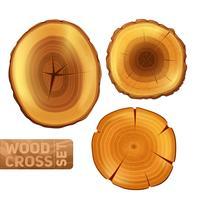 Conjunto de corte transversal de madeira vetor