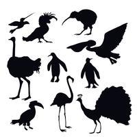Silhuetas de pássaros exóticos