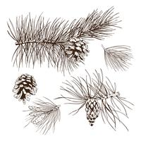 Elemento de design de ramos de pinheiro vetor
