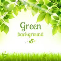 Fundo de folhagem verde fresco natural vetor