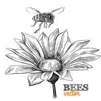 Voando, abelha e flor desabrochando