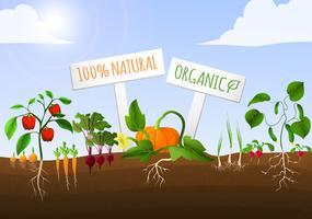 Cartaz de jardim vegetal vetor