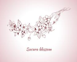 Esboço de flor de sakura