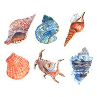 Conjunto de conchas em aquarela vetor