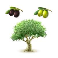 Conjunto de produtos primários de azeite vetor