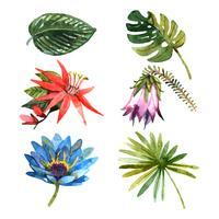 Plantas tropicais deixa ícones de esboço em aquarela