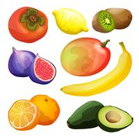 Conjunto de frutas exóticas vetor