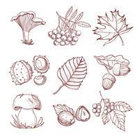 Conjunto de outono de mão desenhada vetor