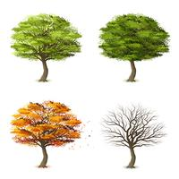 Árvores em quatro temporadas vetor