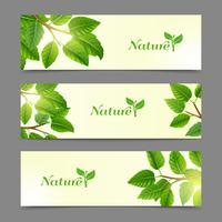 Conjunto de bandeiras de eco de folhas verdes vetor