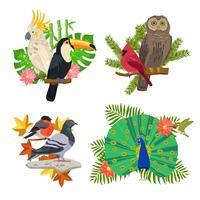 Pássaros e flores conjunto