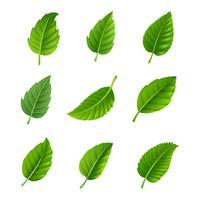 Conjunto decorativo de folhas verdes vetor