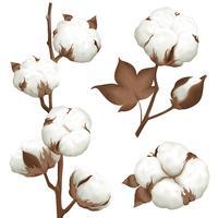 Conjunto realista de algodão Plant Boll vetor